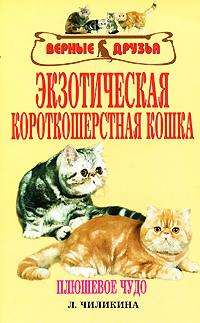 Экзотическая короткошерстная кошка LitRes.ru 33.000