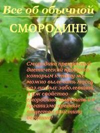 Дубровин, Иван  - Все об обычной смородине