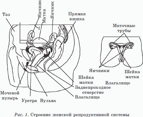 fiziologicheskie-tipi-spermi