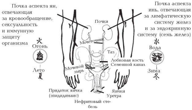 porno-pozhilih-zhenskaya-erektsiya-onlayn