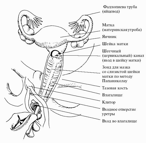 Организм Без Секса