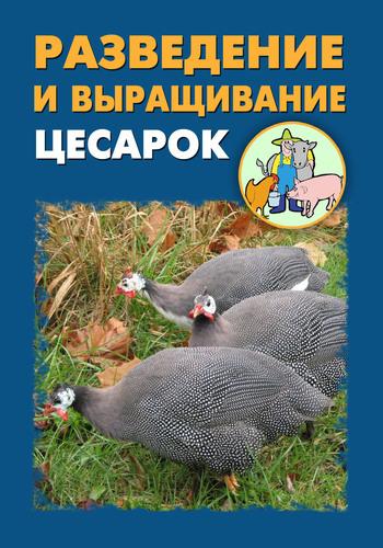 Илья Мельников - Разведение и выращивание цесарок