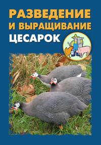 - Разведение и выращивание цесарок