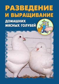 - Разведение и выращивание домашних мясных голубей