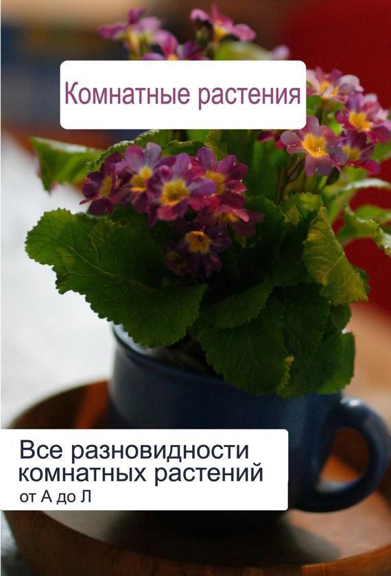 Все разновидности комнатных растений (от А до Л)