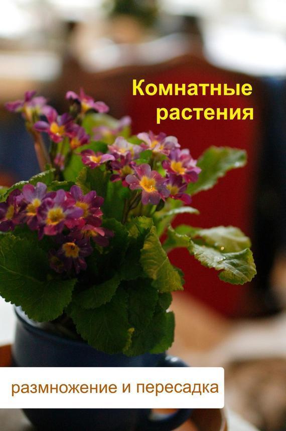 Комнатные растения. Размножение и пересадка