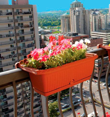Цветы на балконе и лоджии, анастасия скворцова - читать онла.