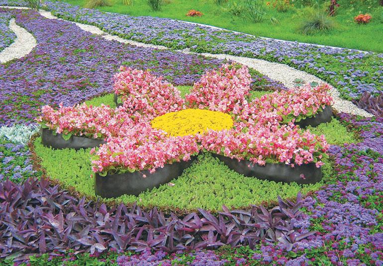 Рисунки из цветов на клумбах