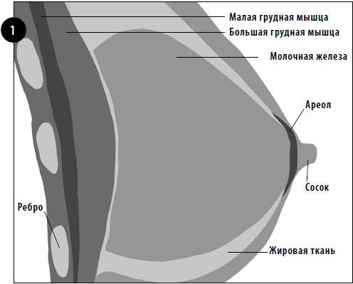 Вокруг железистой ткани между ее долями лежит жир - жировая ткань. . Колич