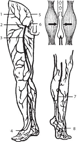 Что надо есть при варикозе ног