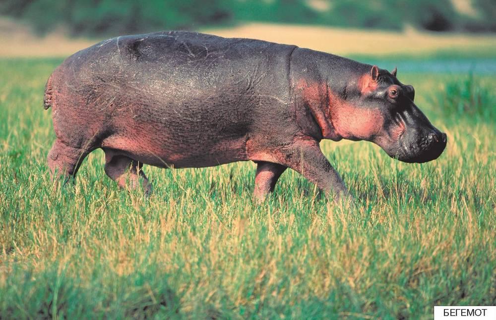 Интересные факты о животных выпуск 157 (22 фото)