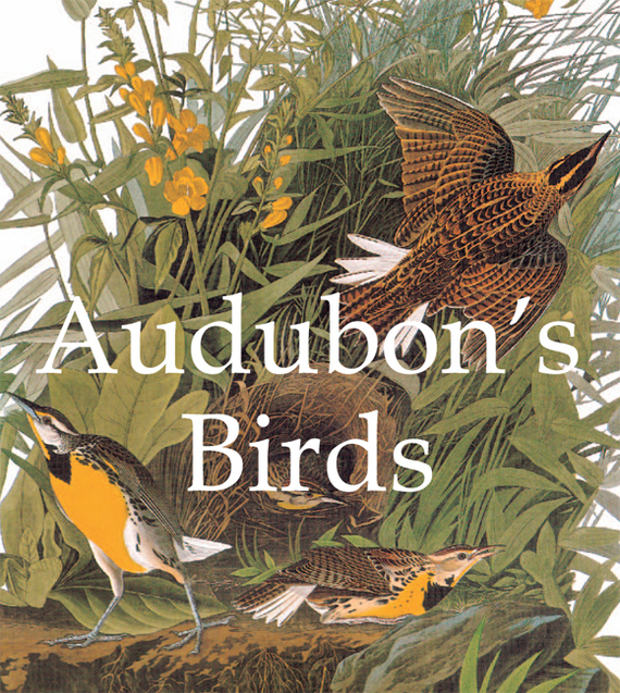 John James Audubon Audubon's Birds