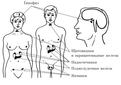 Как лечить заболевание щитовидной железы у женщин