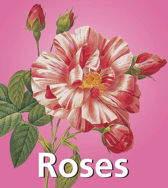 Victoria Charles Roses victoria charles dibujos eróticos