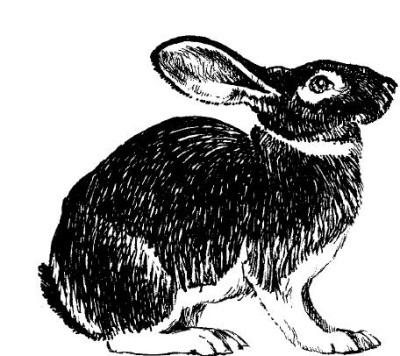 Читать онлайн - Кролики: разведение, содержание, уход - Виктор Горбунов