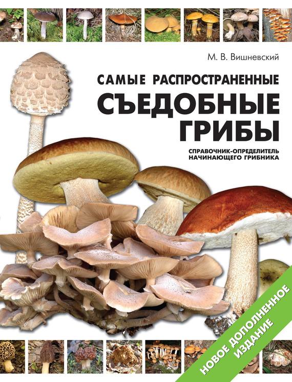 Скачать книгу грибы на асфальте