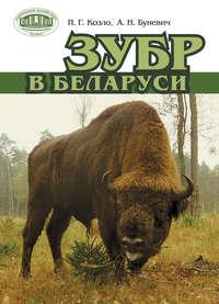 Козло, П. Г.  - Зубр в Беларуси