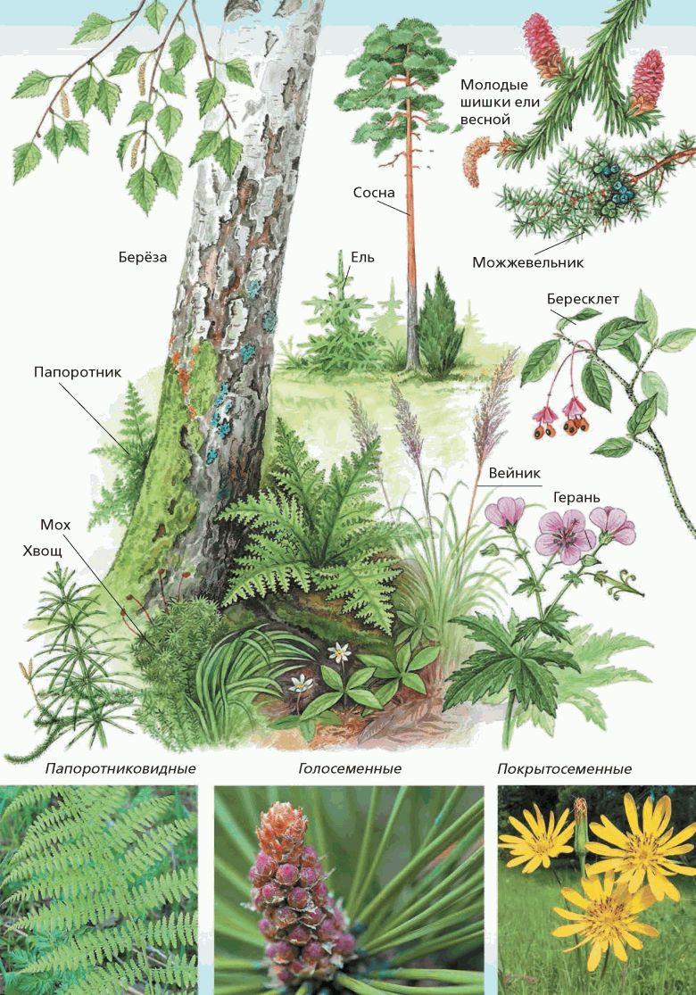 Конспект на тему высшие растения по учебнику н.и.сонина