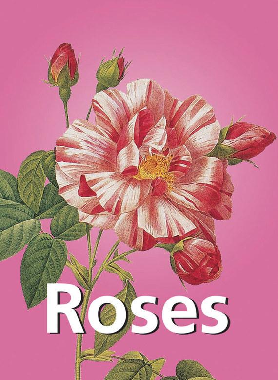Pierre-Joseph Redoute Roses joseph a the living