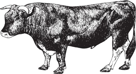Она сосала у быка