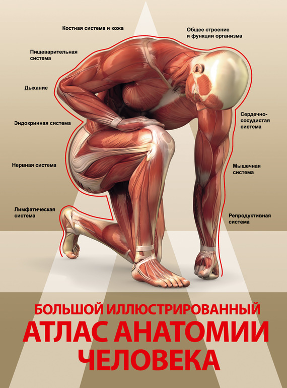 Анна Спектор Большой иллюстрированный атлас анатомии человека спектор анна артуровна большой иллюстрированный атлас анатомии человека