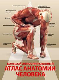Спектор, Анна  - Большой иллюстрированный атлас анатомии человека