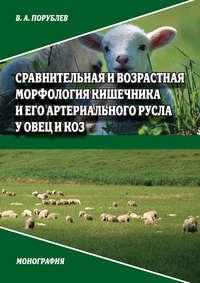 Порублев, В. А.  - Сравнительная и возрастная морфология кишечника и его артериального русла у овец и коз