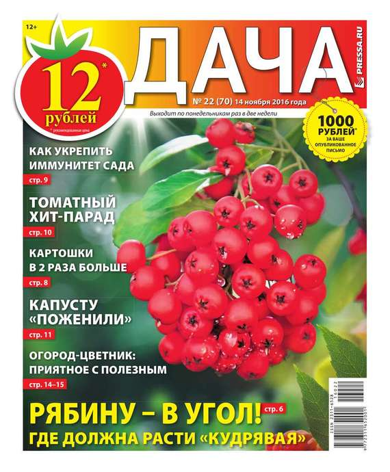 Дача Pressa.ru 22-2016