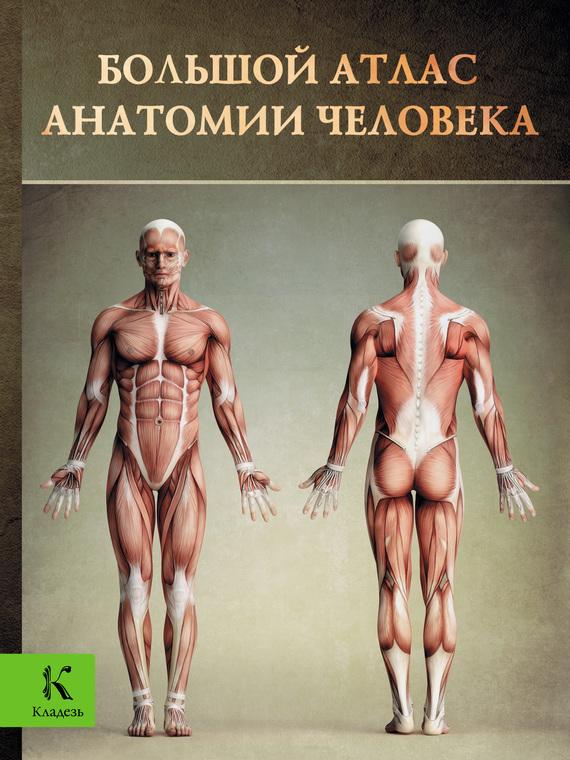Винсент Перез Большой атлас анатомии человека анна спектор большой иллюстрированный атлас анатомии человека