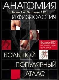 Билич, Г. Л.  - Анатомия и физиология. Большой популярный атлас