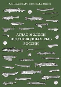 Павлов, Д. С.  - Атлас молоди пресноводных рыб России