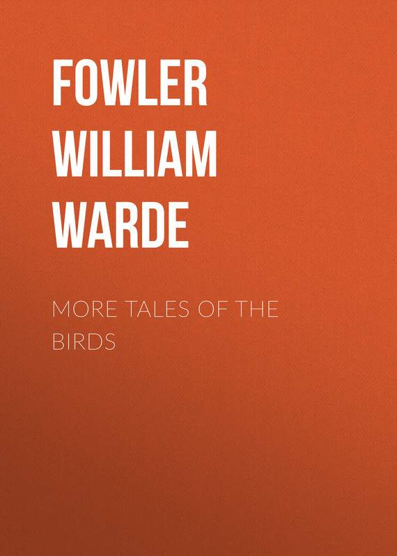 Fowler William Warde More Tales of the Birds birds the art of ornithology