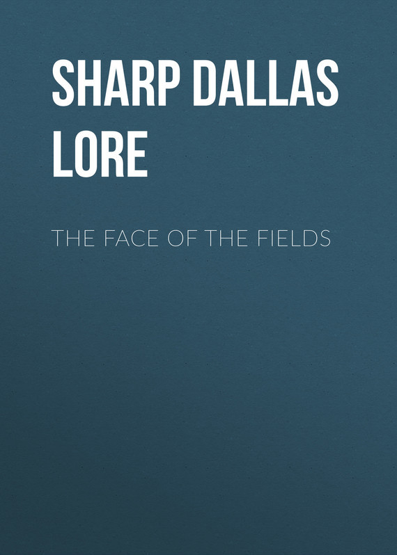 Sharp Dallas Lore The Face of the Fields fields of vision