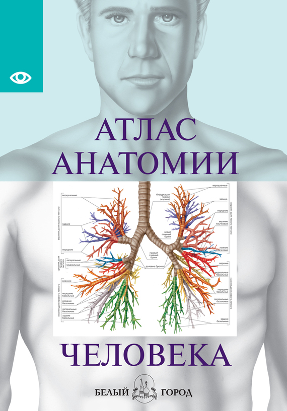 Отсутствует. Атлас анатомии человека. Все органы человеческого тела
