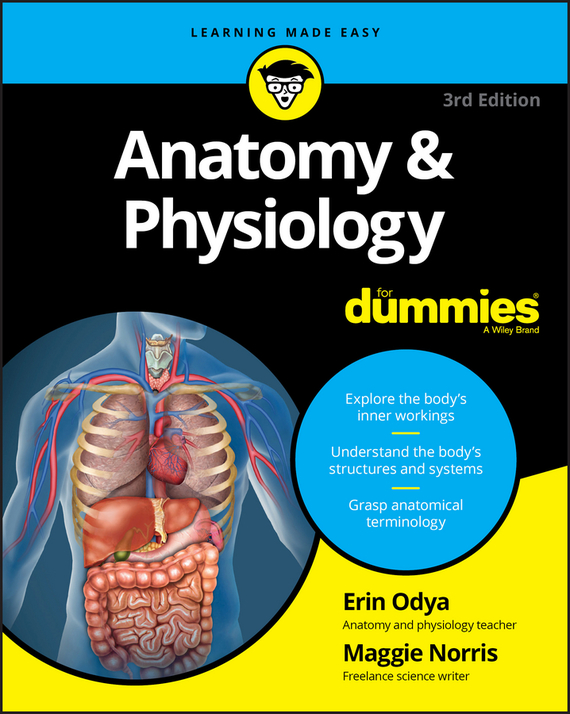 Erin Odya Anatomy and Physiology For Dummies human anatomical anatomy hand medical model nerve blood vessel divided