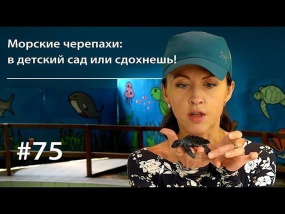 Евгения Тимонова бесплатно