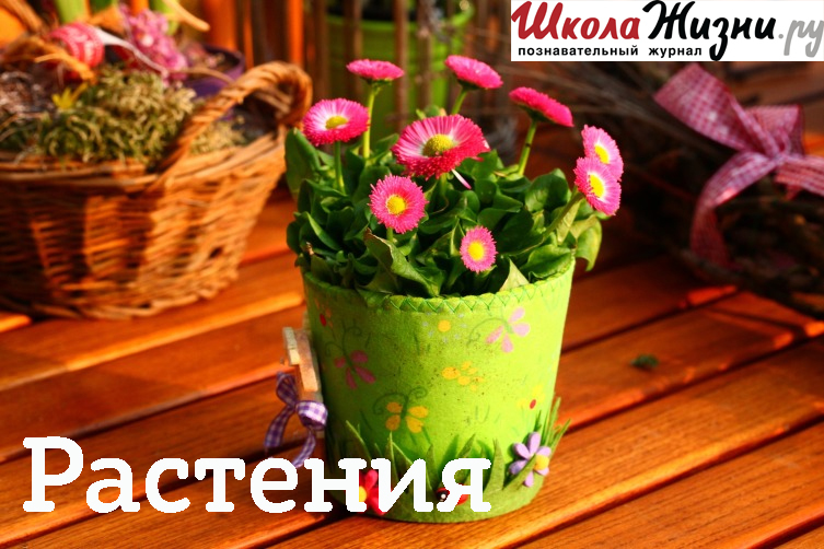 Екатерина Новосад Как забудешь незабудку? forget me not 7