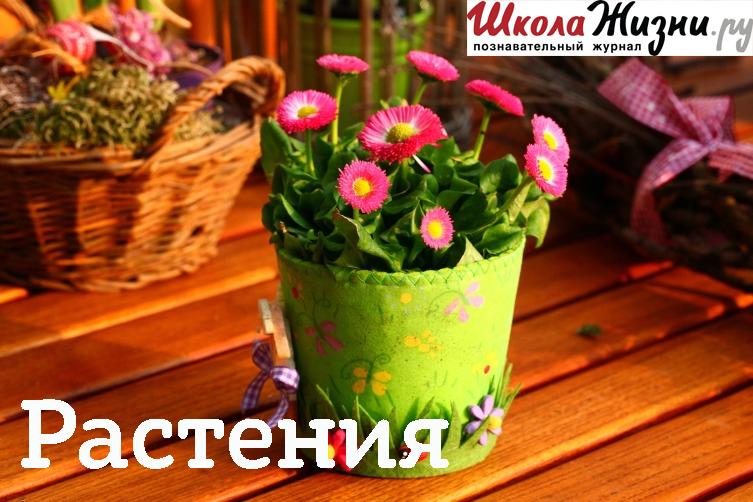 Татьяна Кардаполова Что такое бонсай?
