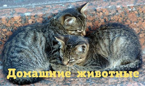 Алексей Норкин Как нам помогают домашние животные