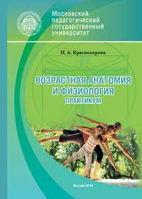 Н. А. Красноперова - Возрастная анатомия и физиология. Практикум