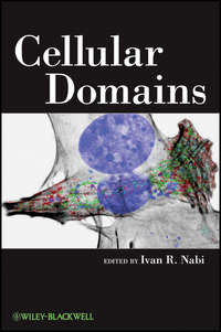 Ivan Nabi R. - Cellular Domains