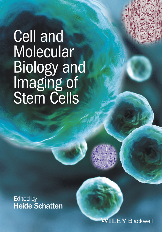 Heide Schatten Cell and Molecular Biology and Imaging of Stem Cells