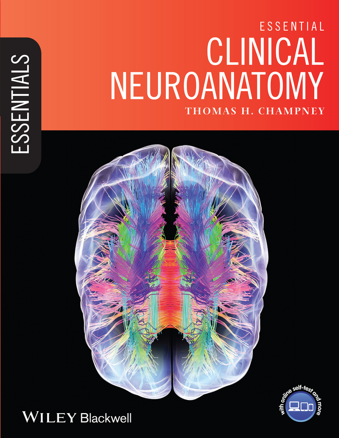 Thomas Champney H. Essential Clinical Neuroanatomy anatomy of tongue and its clinical relevance in orthodontics