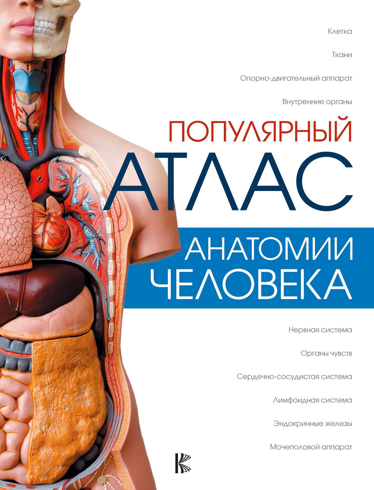 Л. Н. Палычева Популярный атлас анатомии человека г л билич анатомия человека большой популярный атлас