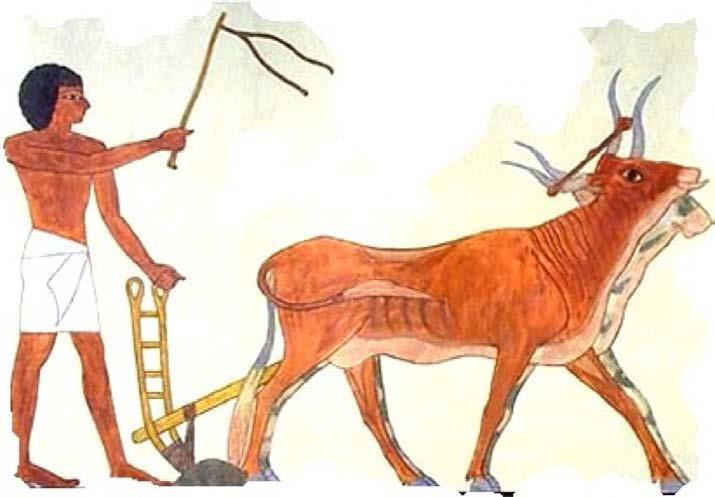 the role of farmers and herdsmen in society and agriculture in the ancient world Pastoralism is the branch of agriculture concerned with the raising of livestock it is animal husbandry : the care, tending and use of animals such as cattle , camels , goats , yaks , llamas , reindeers , horses and sheep.