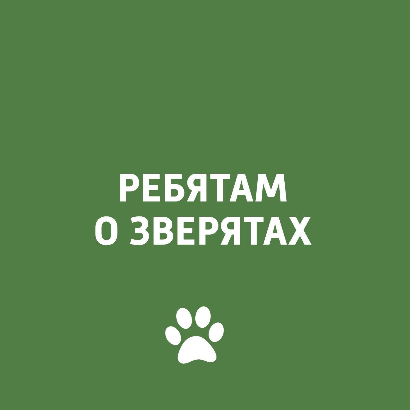 Творческий коллектив программы «Пора домой» Животные и Олимпиада собачьи истории