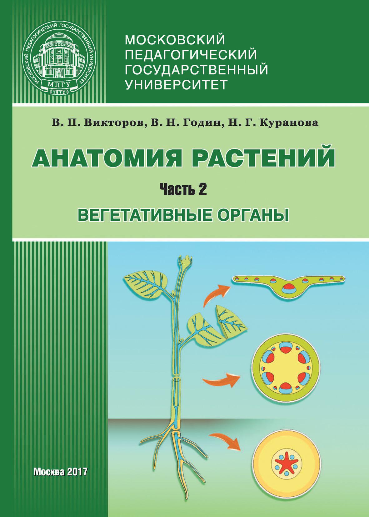 В. П. Викторов Анатомия растений. Часть 2. Вегетативные органы капанджи а нижняя конечность функциональная анатомия