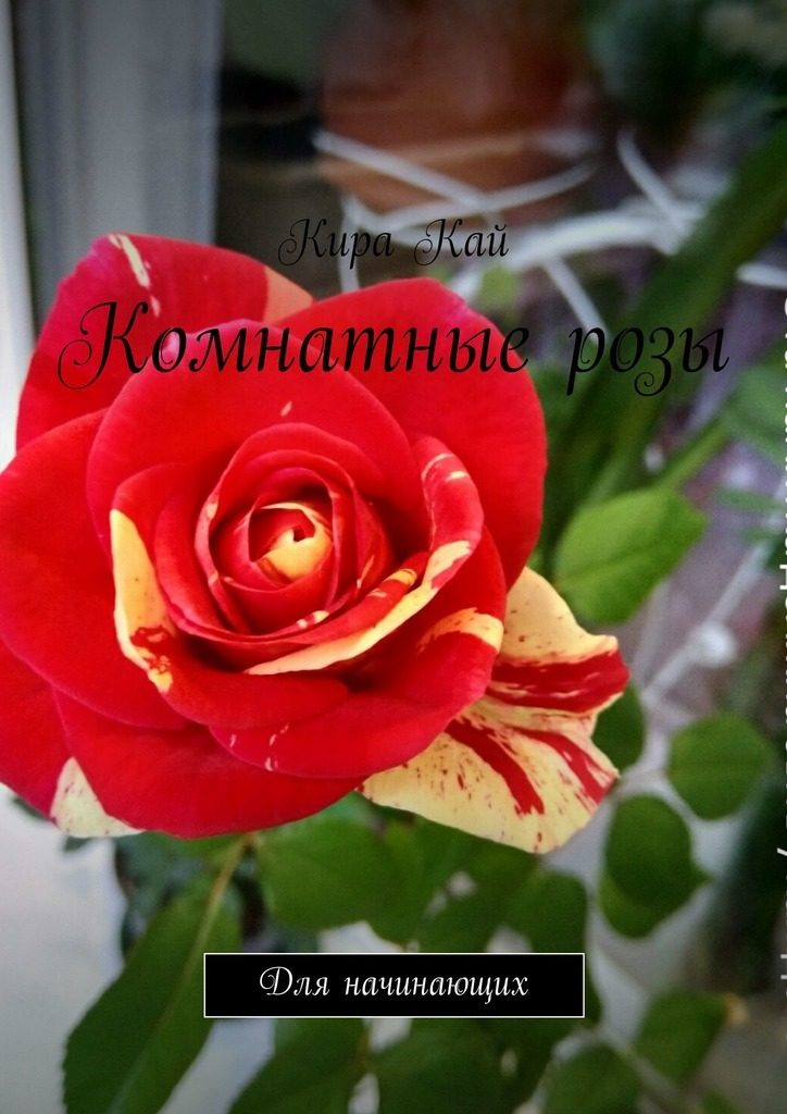 Комнатные розы. Для начинающих