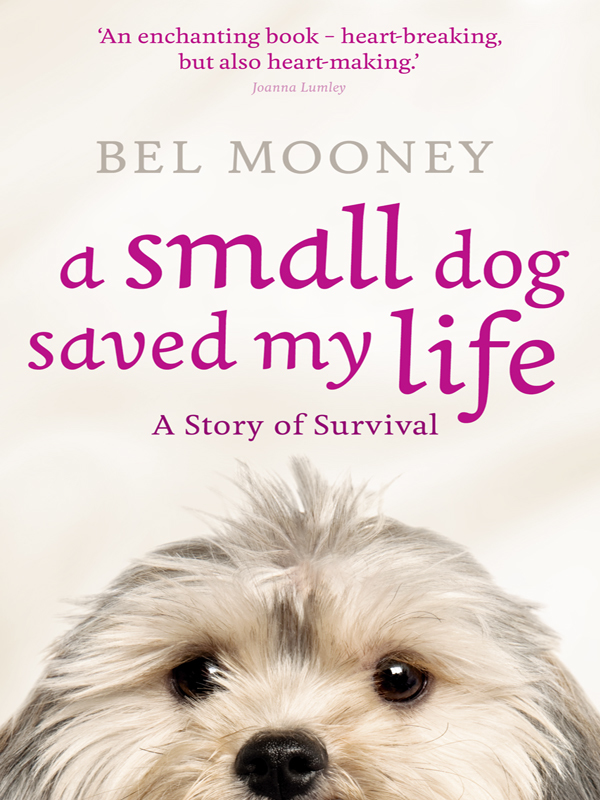 A Small Dog Saved My Life